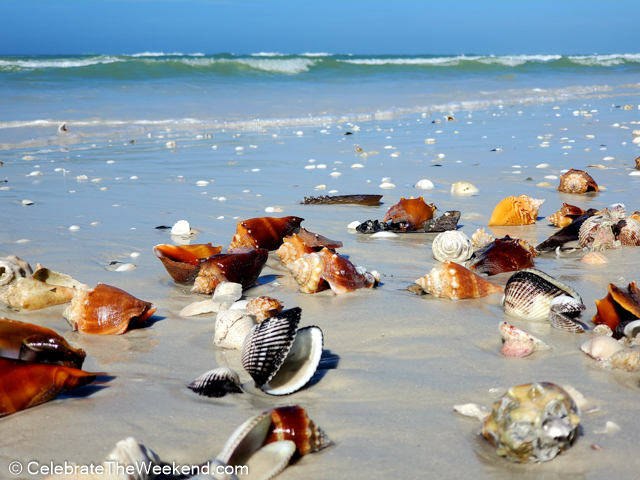 Things to do on Marco Island Florida